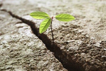 Resistencia y propósito